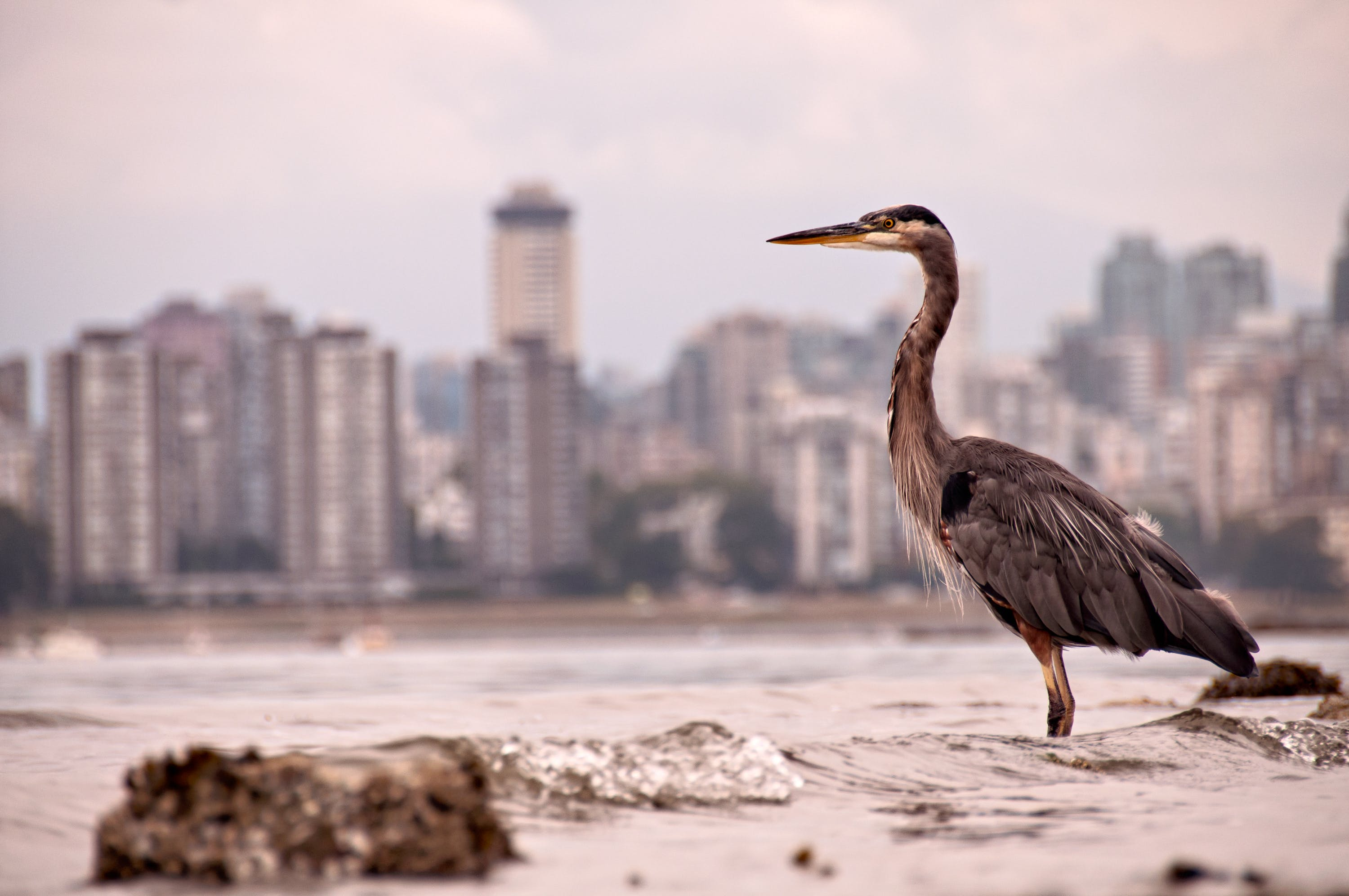 Photo of Gray and Brown Bird with Cityscape in the Background