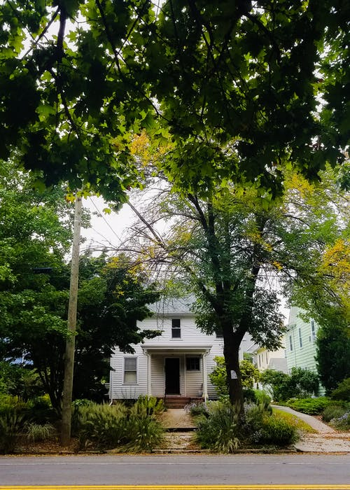 Gratis lagerfoto af gade, grøn, hvid, træer