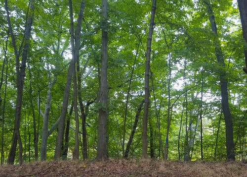 Free stock photo of forest, green, plants, trees