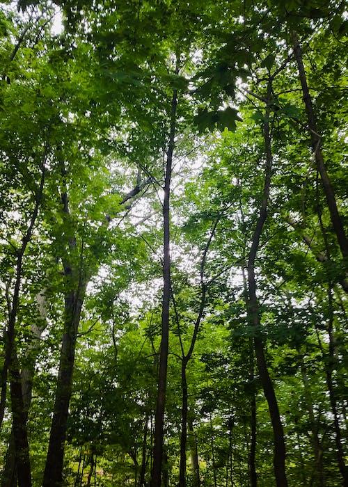 Gratis lagerfoto af grøn, kraftværker, skov, træer