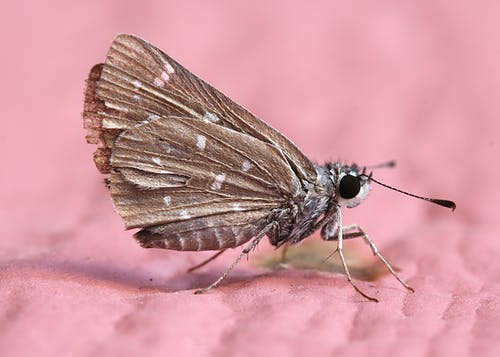 Foto stok gratis kupu-kupu, merapatkan, ngengat