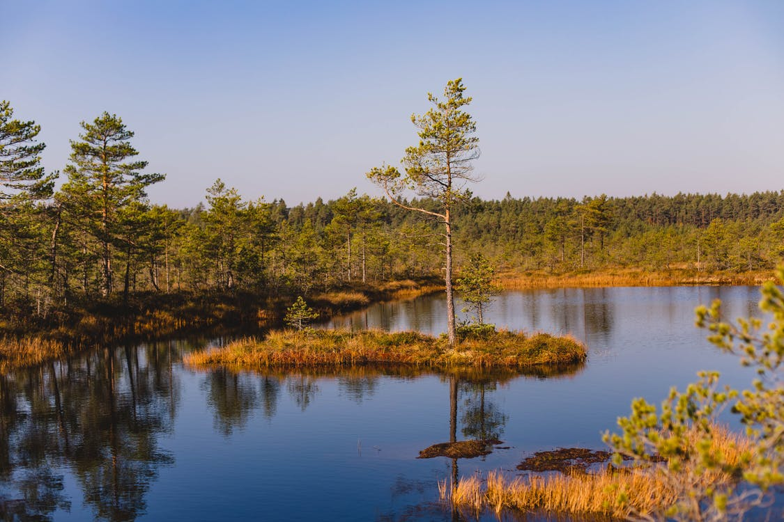 agua, árbol, bosque