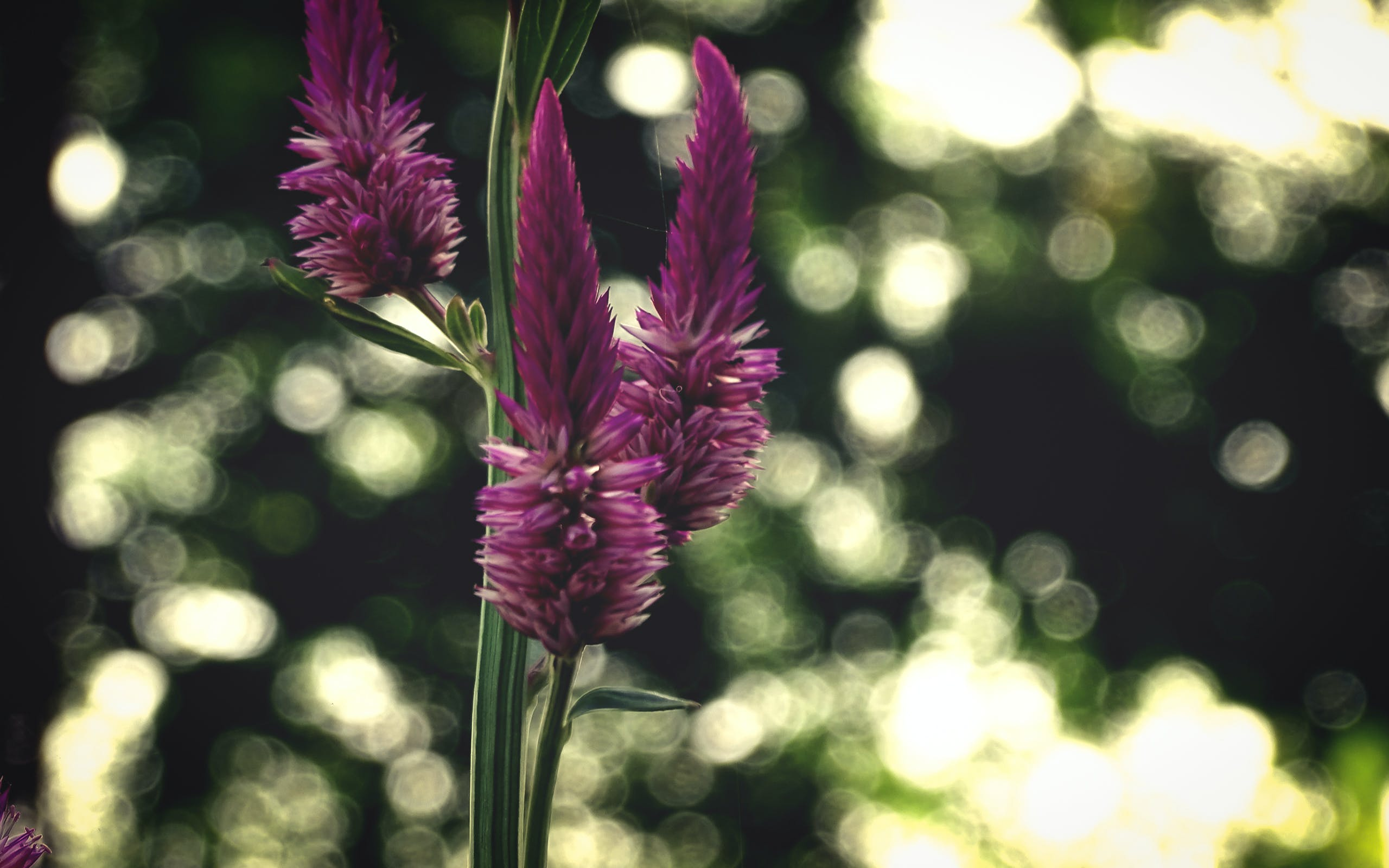 Free stock photo of bokeh, colour, flower, goodlooking