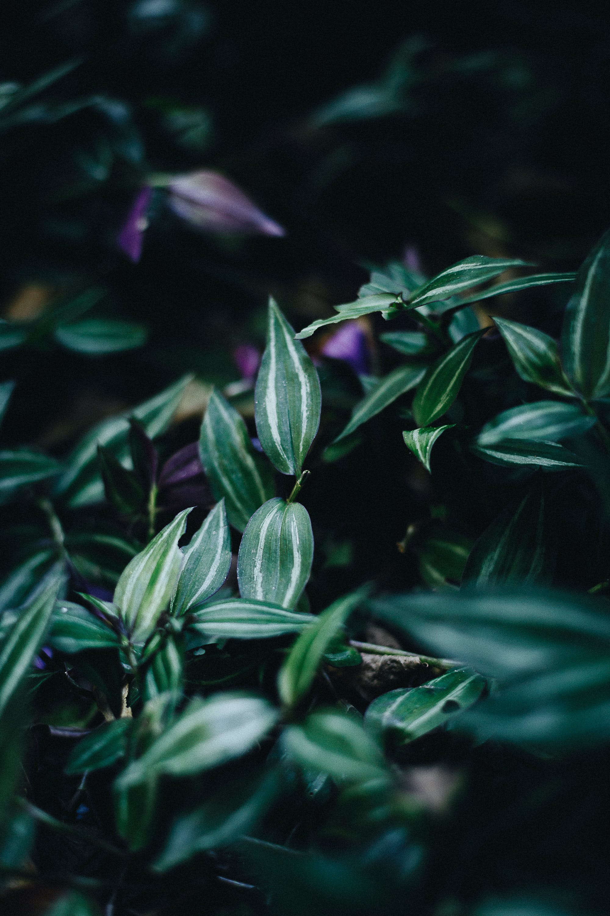 Close-up Photo of Leafy Plant
