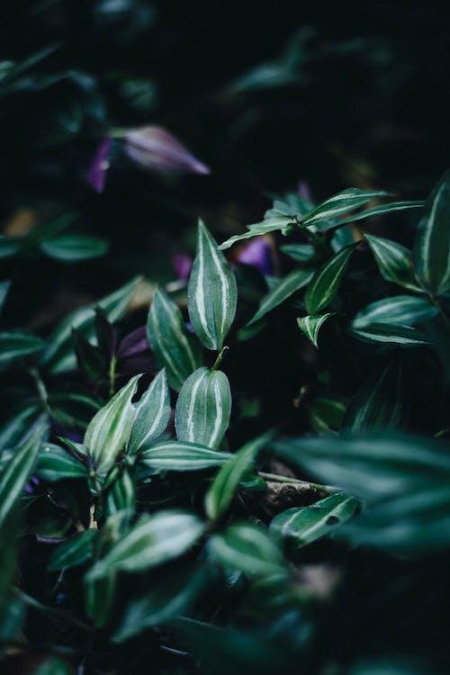 Foto De Close Up De Planta Frondosa