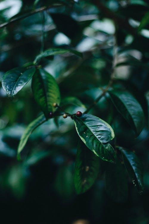 나무, 성장, 식물