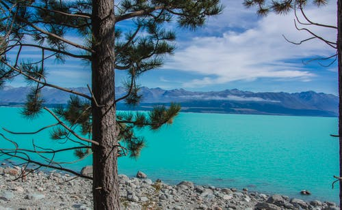 Immagine gratuita di #pinetree #lake #mountains #lagoon #newzealand