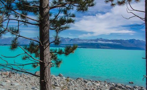 Fotos de stock gratuitas de #pinetree #lake #mountains #lagoon #newzealand