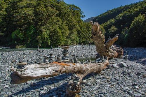 Fotos de stock gratuitas de #rocks #branch #tree