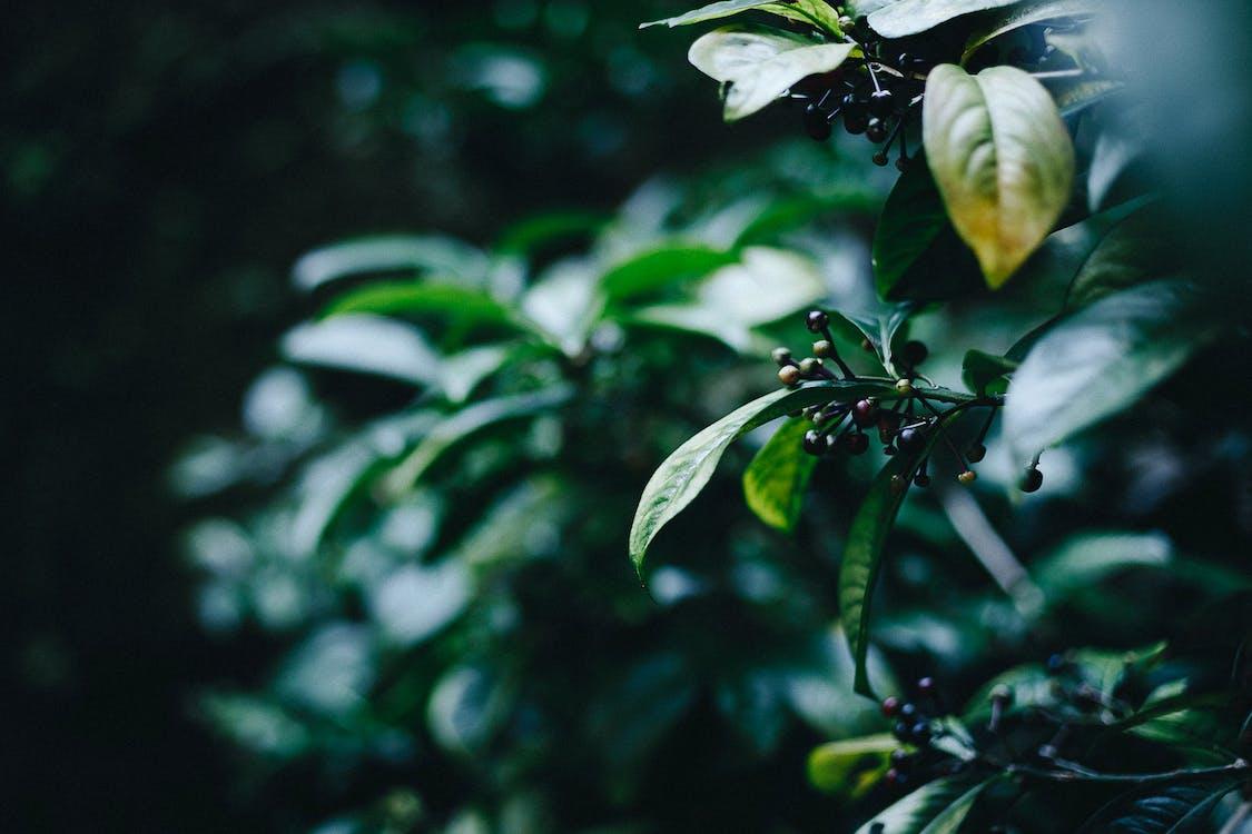 คลังภาพถ่ายฟรี ของ กลางแจ้ง, การถ่ายภาพธรรมชาติ, การเจริญเติบโต