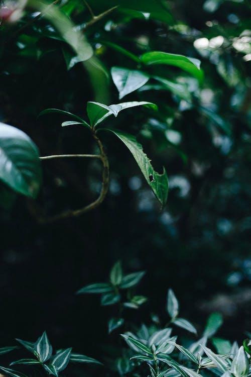 Free stock photo of botanical, botanical garden, dark green plants, flower