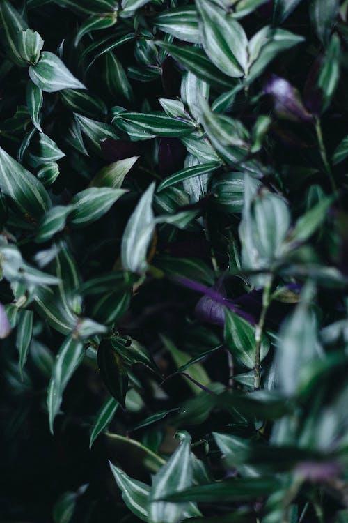 나뭇잎, 짙은 녹색 식물, 클로즈업의 무료 스톡 사진