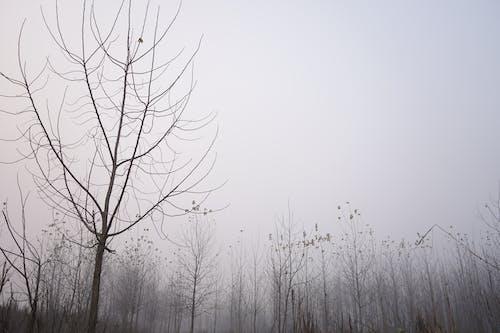 Fotos de stock gratuitas de al aire libre, ángulo bajo, árbol, blanco