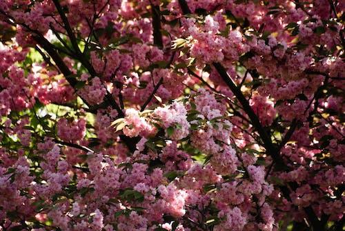 Ilmainen kuvapankkikuva tunnisteilla avioitua, kukat, kukka, lila