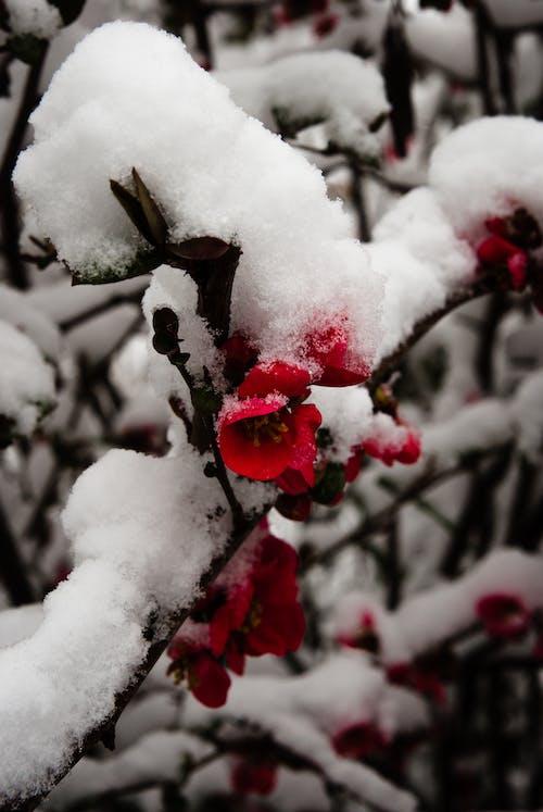 Foto profissional grátis de escuro, flor, inverno, neve