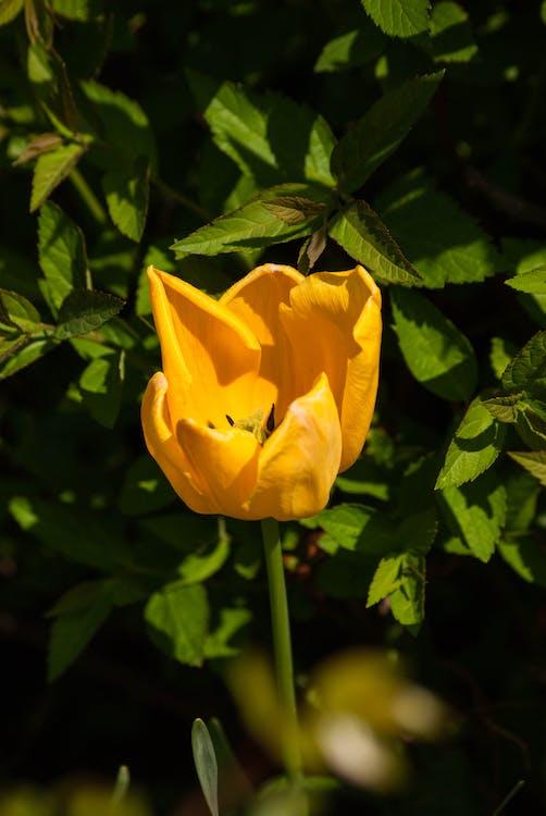 amarelo, ecológico, flor