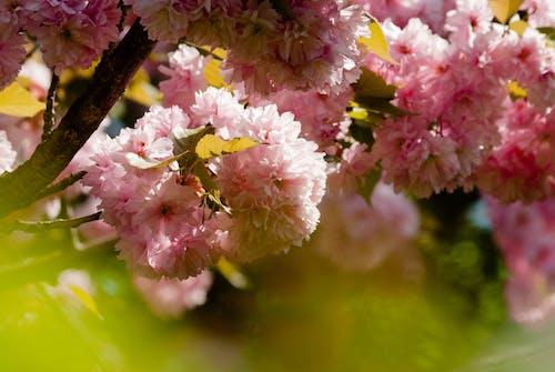 Foto profissional grátis de casar, ecológico, flor, lilás