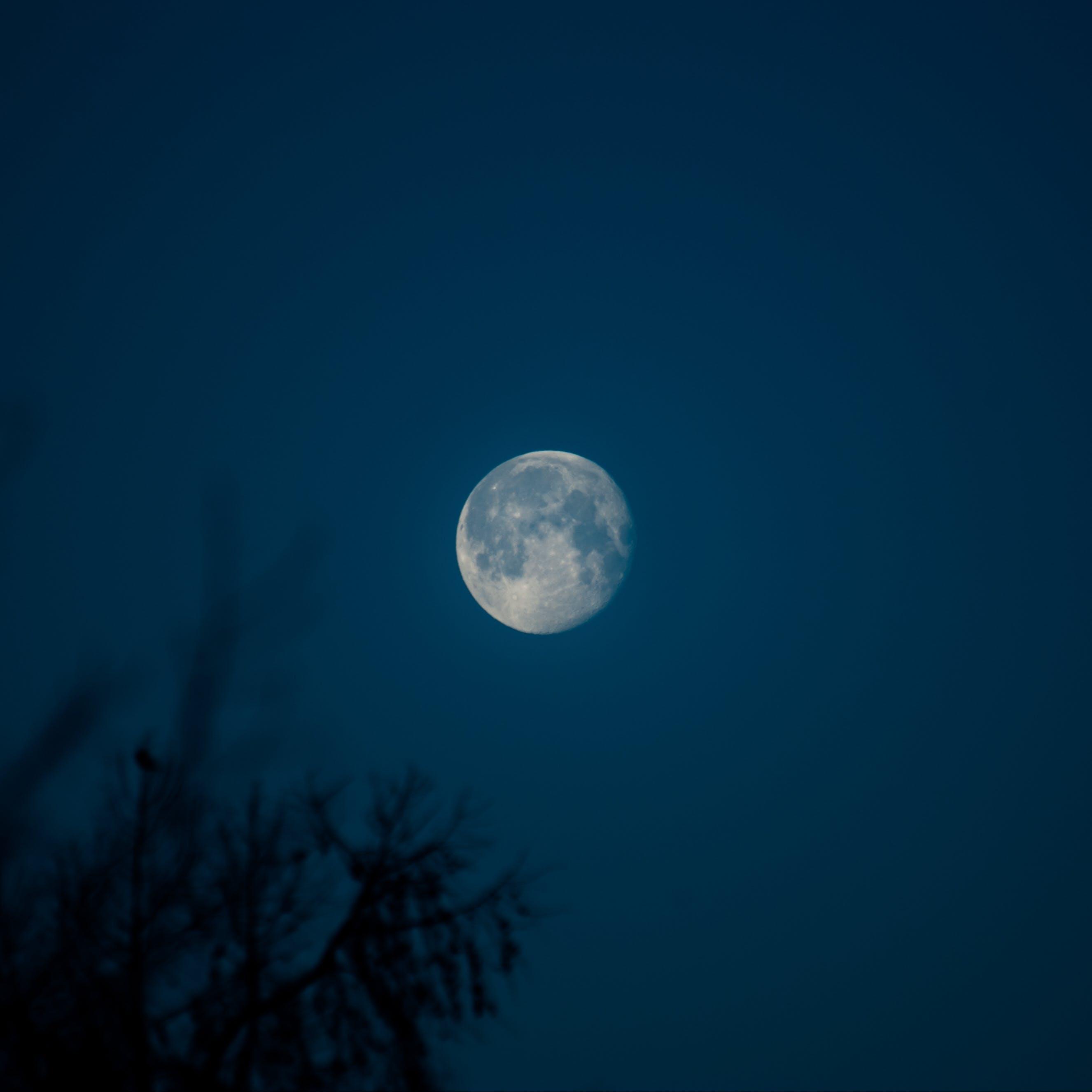 Foto d'estoc gratuïta de brillant, fosc, lluna, nit