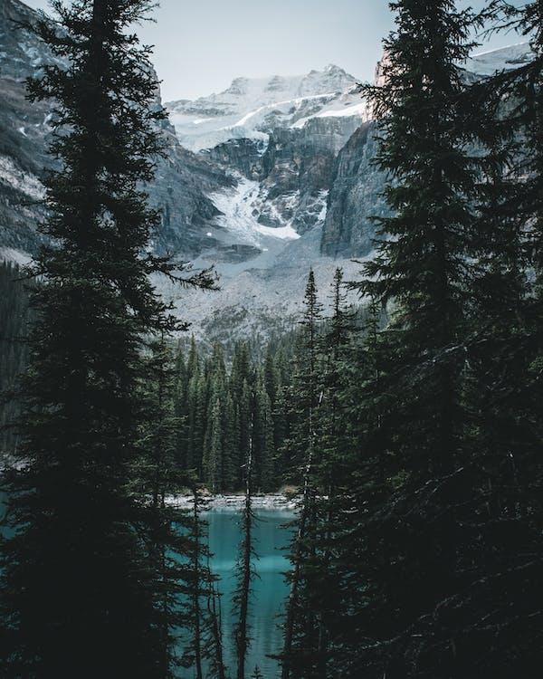 bergen, bergtop, bomen