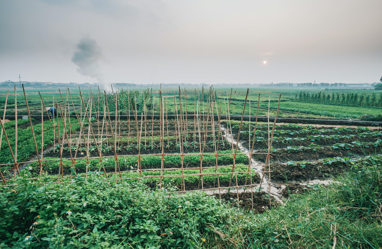 Foto stok gratis bidang, lahan pertanian, pagar, pertanian