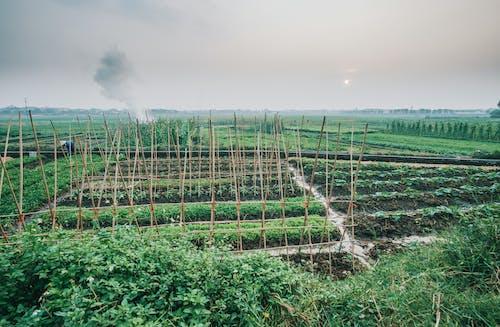 alan, bitki, büyüme, Çiftlik içeren Ücretsiz stok fotoğraf