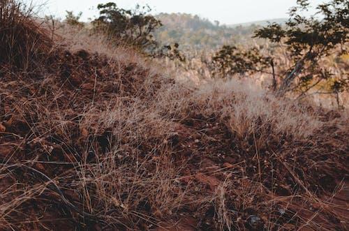 Kostenloses Stock Foto zu abenteuer, brasilien, cerrado, erforschen