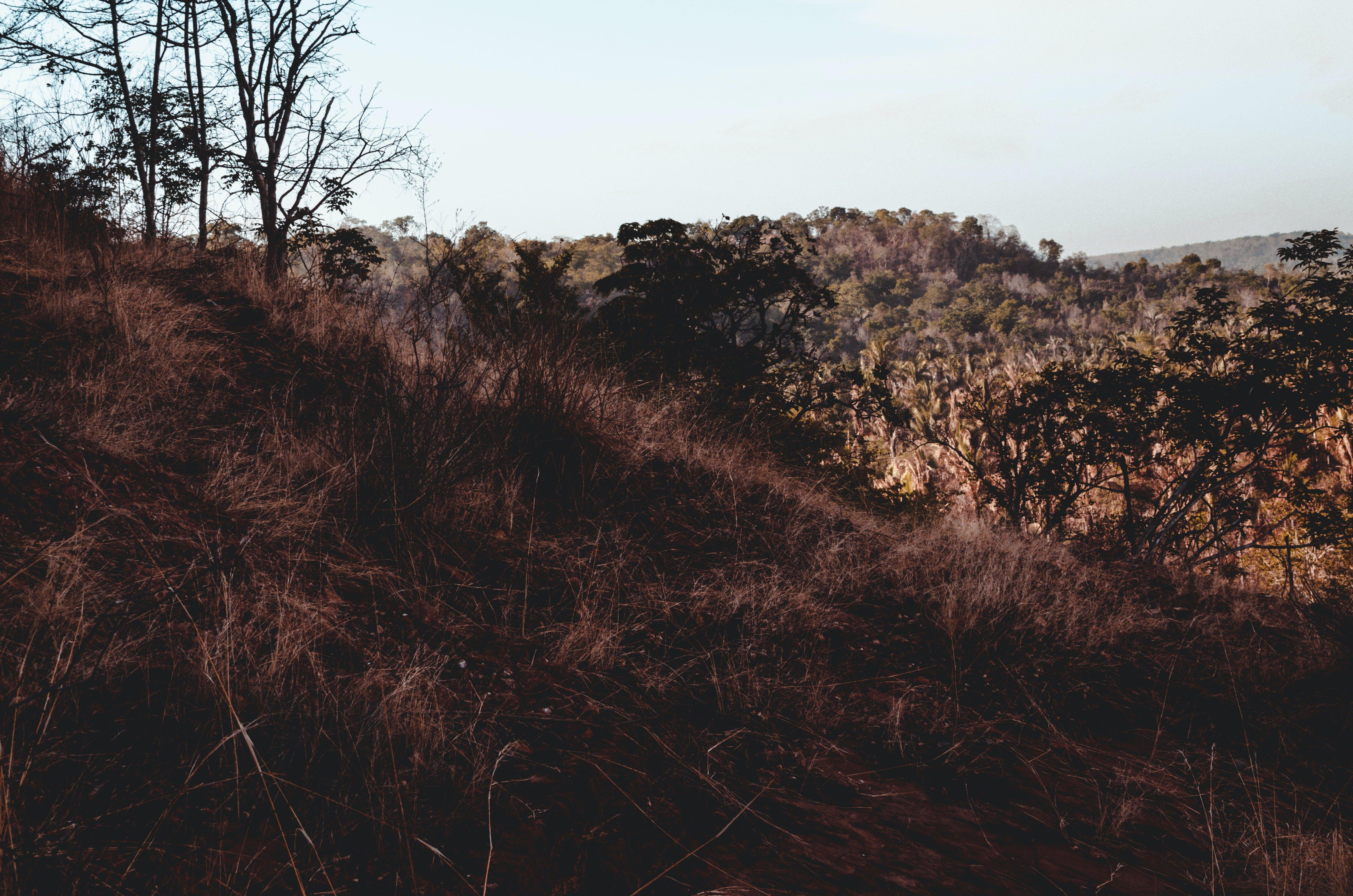 Free stock photo of adventure, brazil, cerrado, desert