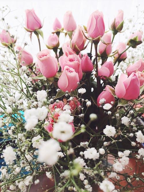 Immagine gratuita di arredamento, arredamento della casa, bouquet, carino