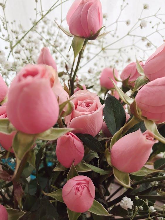 colorat, flori, frunze