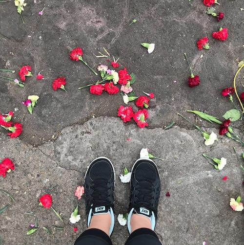 Kostenloses Stock Foto zu estilo, flores, lebensstil, lifestyle