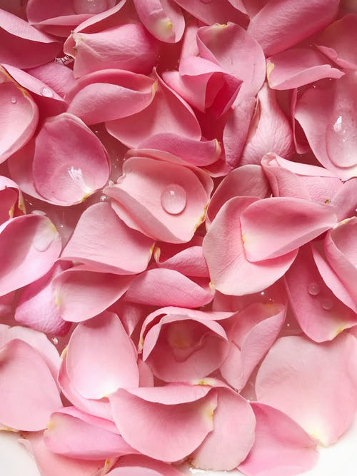 분홍색 꽃잎