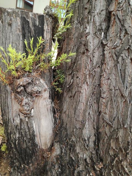 木材, 木製, 樹皮, 緑の無料の写真素材