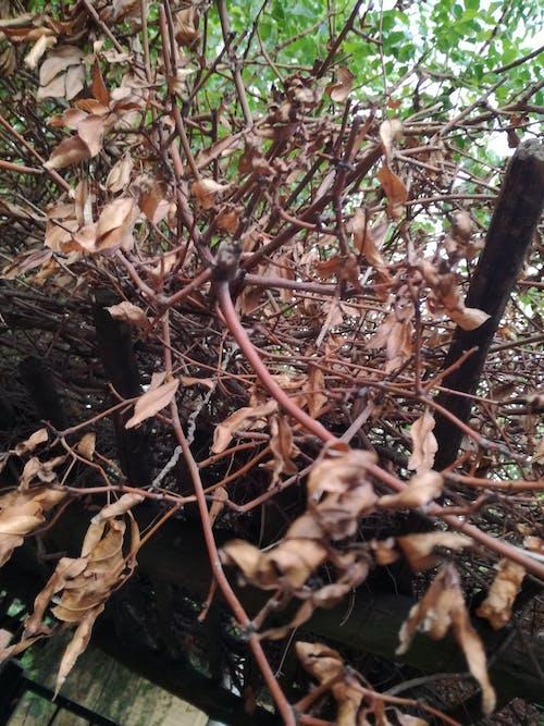 乾いた葉, 秋の気分の森, 自然, 自然写真の無料の写真素材