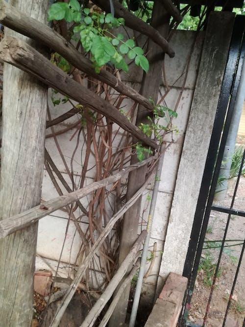 Gratis lagerfoto af bark, grøn, grønne blade, natur