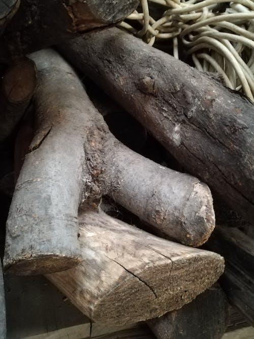 オーク, 樹皮, 自然, 自然写真の無料の写真素材