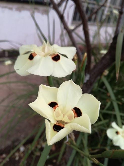 Gratis lagerfoto af blomst, blomster, kronblade, natur