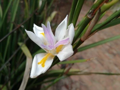 フラワーズ, 自然, 自然写真, 花の無料の写真素材
