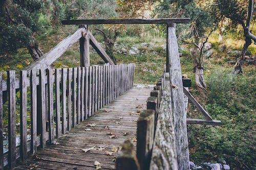Δωρεάν στοκ φωτογραφιών με γέφυρα, γραφικός, δέντρα, ειδυλλιακός