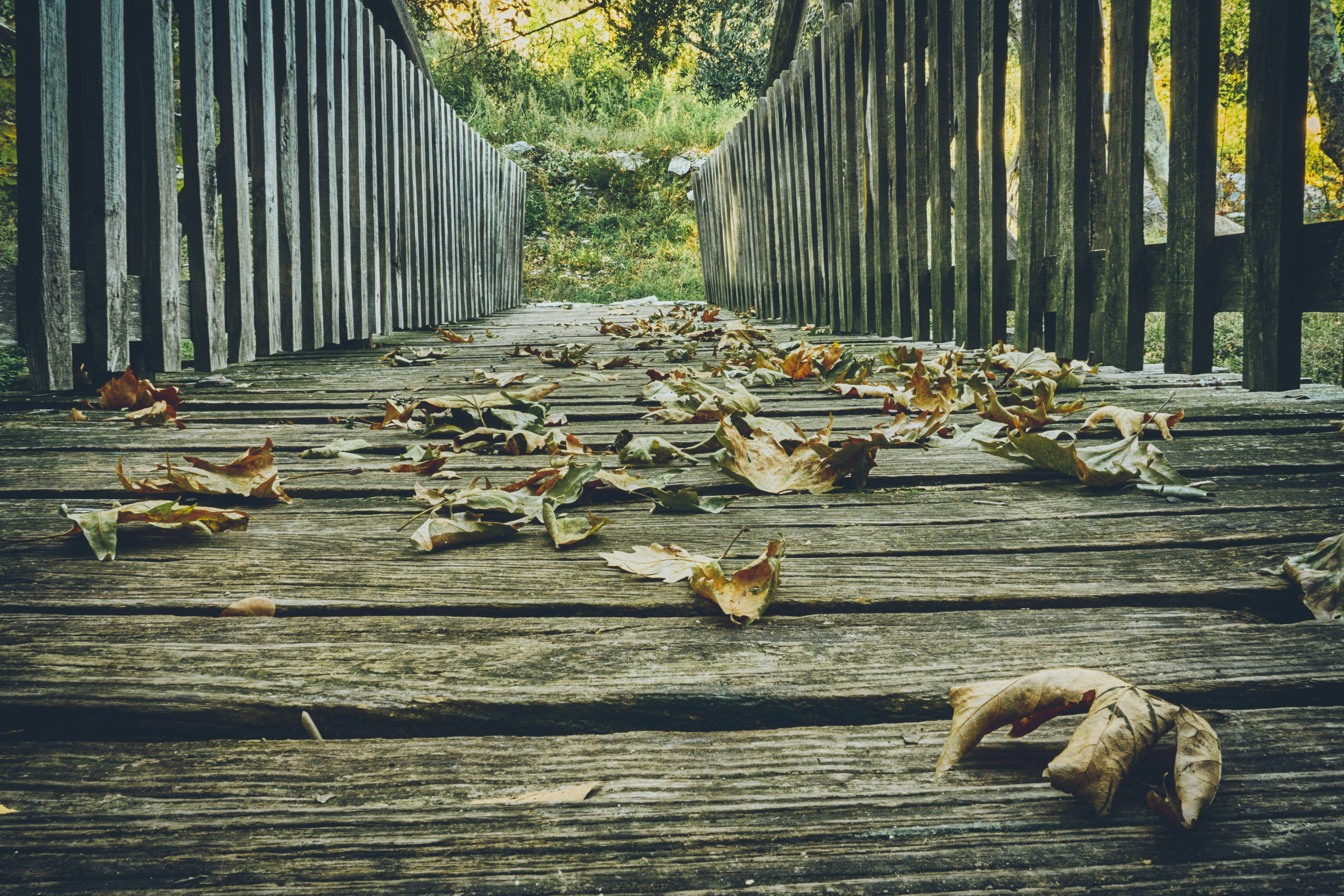 Free stock photo of adventure, autumn, autumn colours, bridge