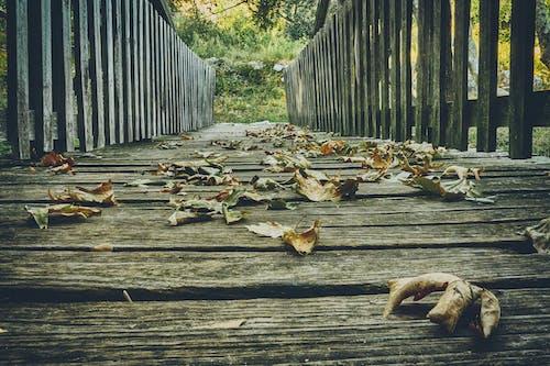 Δωρεάν στοκ φωτογραφιών με γέφυρα, γραφικός, ειδυλλιακός, ξιφασκία