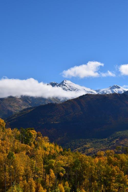 ağaçlar, ahşap, arazi, bulutlar içeren Ücretsiz stok fotoğraf