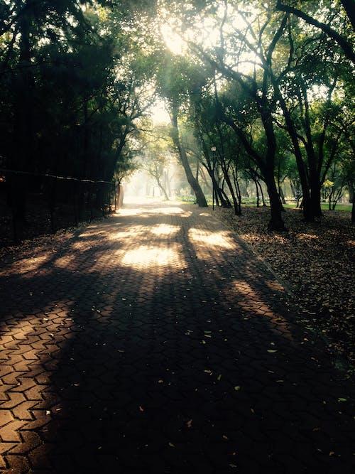Fotobanka sbezplatnými fotkami na tému lesný strom, matka príroda, príroda, strom