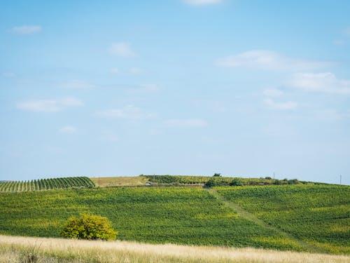 Gratis lagerfoto af domeniile blaga, grøn, høst, landskab
