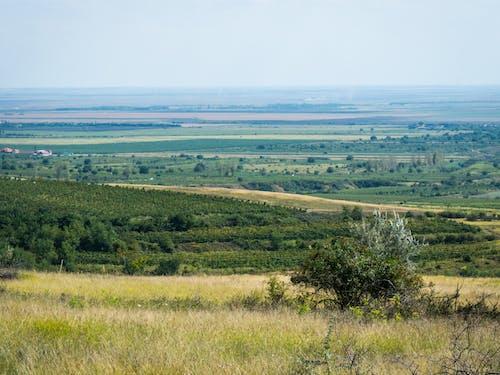 Fotos de stock gratuitas de bodega, cosecha, domeniile blaga, naturaleza
