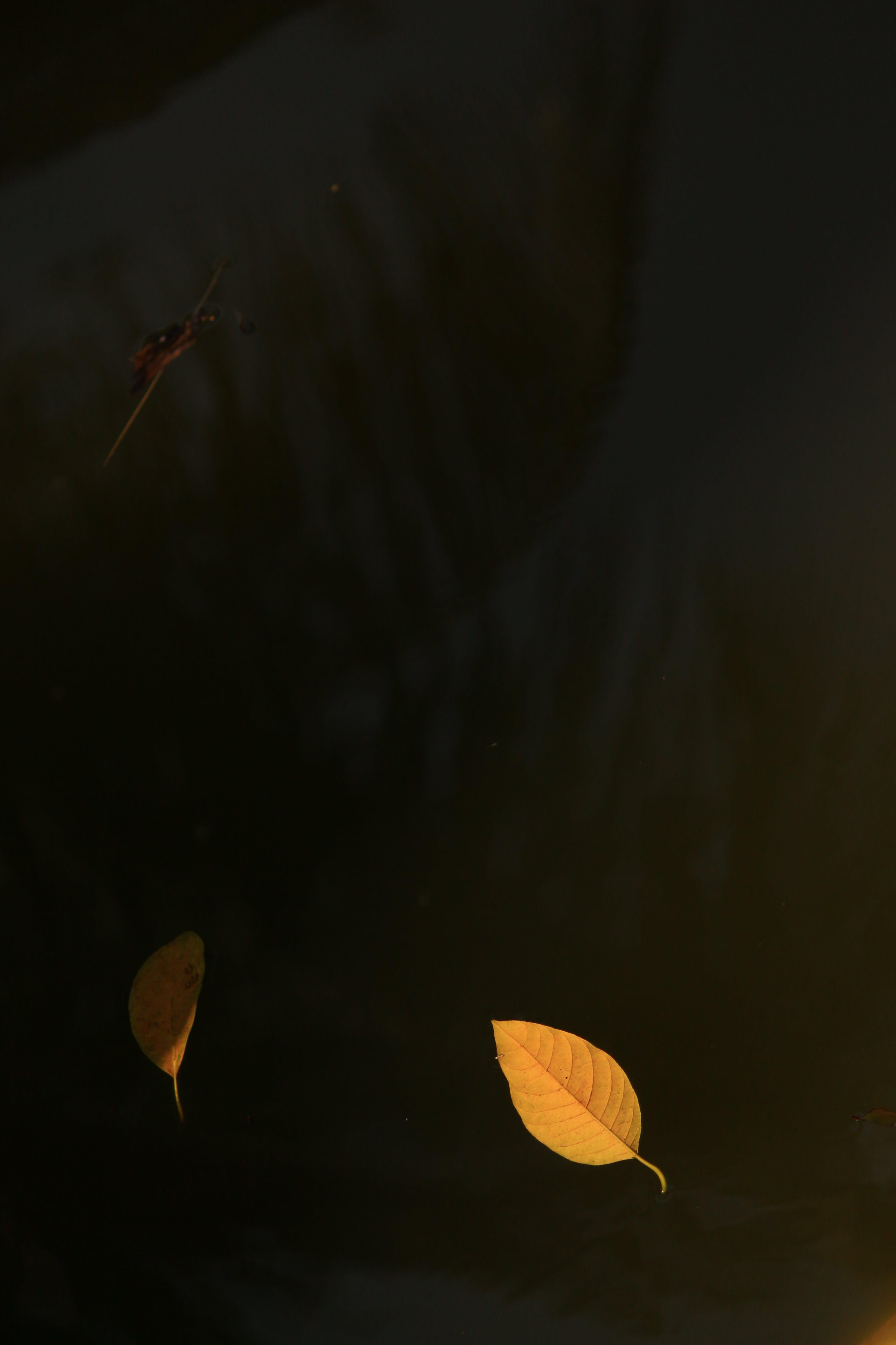 Free stock photo of autumn leaf, leaf, leaf on water, yellow leaf