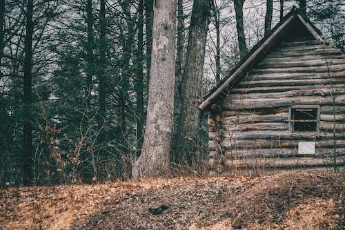 Foto d'estoc gratuïta de abandonat, arbres, bosc, boscos