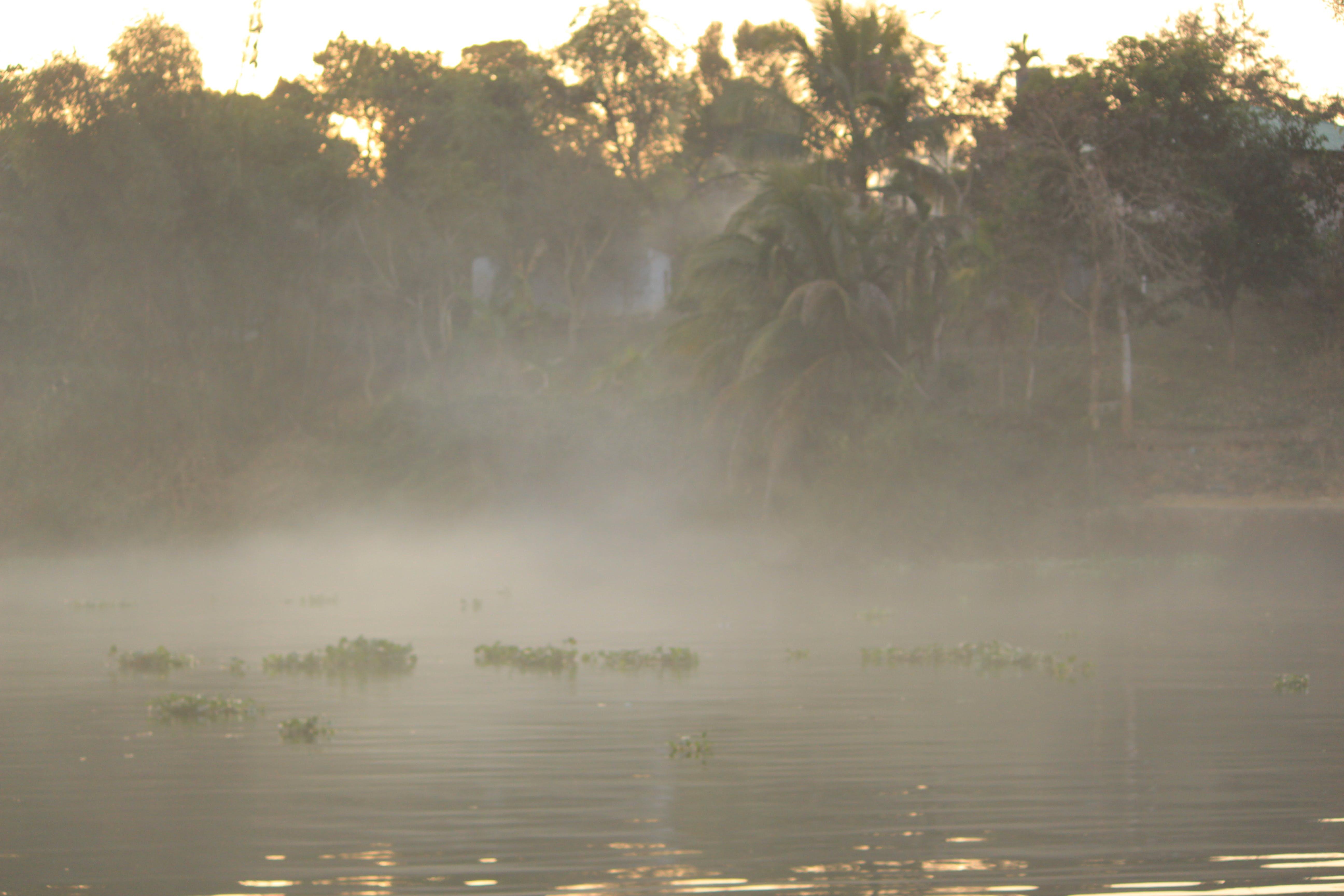 Free stock photo of foggy, nature, nature life, nature photography