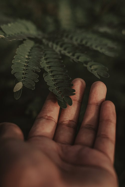 Selective Focus Photography of Person Touching Green Leafed Plant