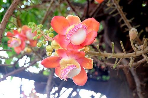 Free stock photo of beautiful flowers, blossom, flowers, tree