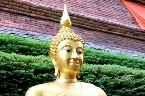 Základová fotografie zdarma na téma buddha, chrám, socha, zlatá